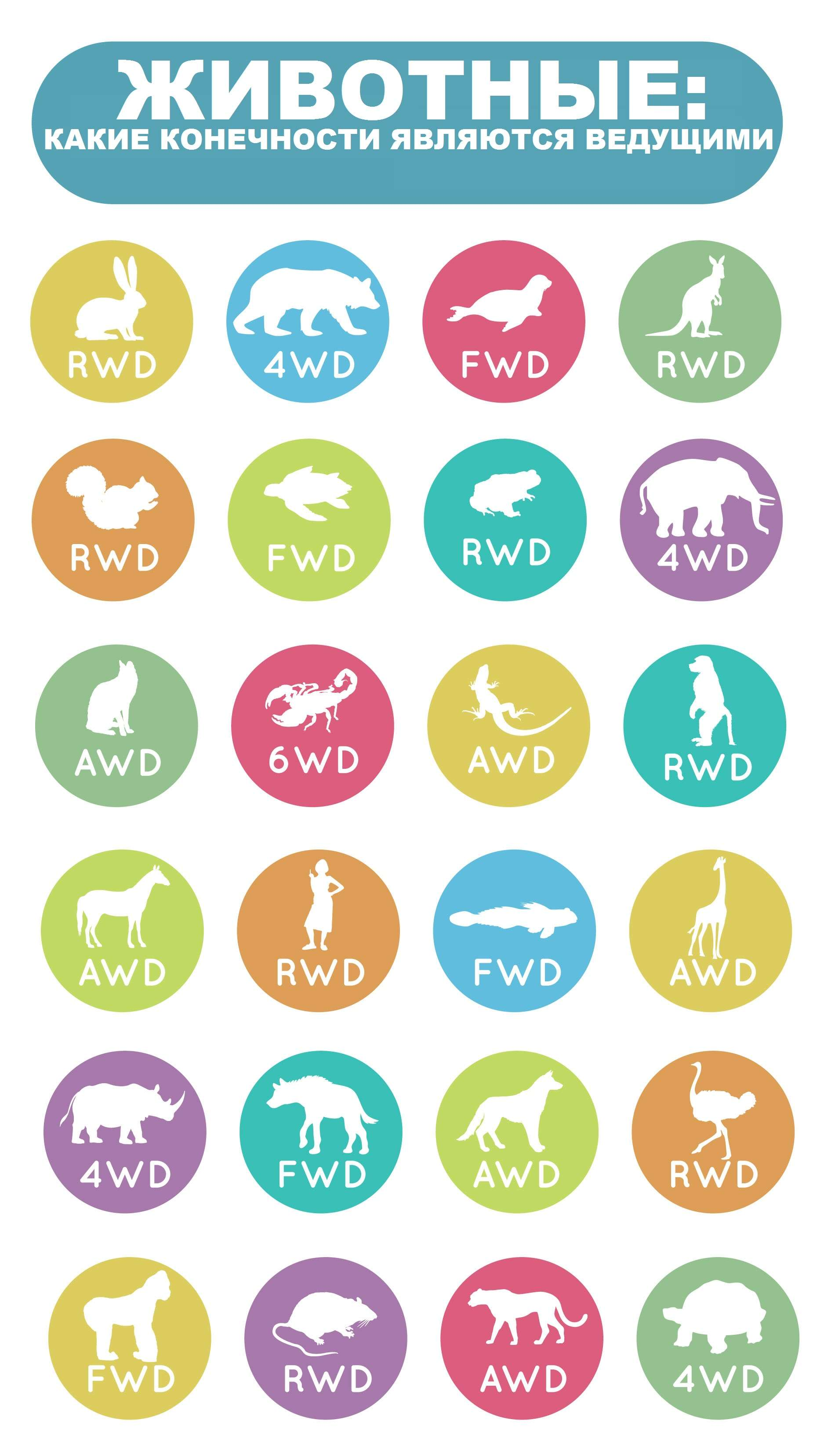 Незвичайна інфографіка: Задньопривідні, передньопривідні і повнопривідні тварини