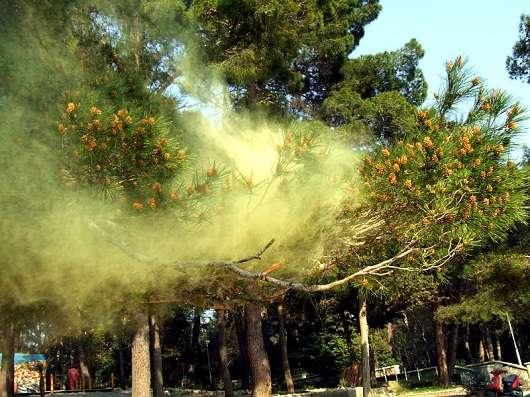 Що повинні знати автомобілісти про алергії і чим вона небезпечна для водіїв